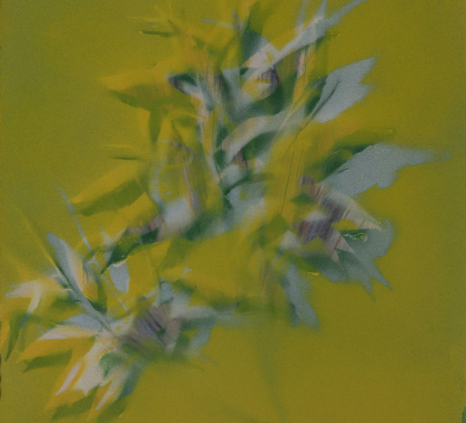 Leopold-Kogler_fleurs-fantomes_0121_Foto-(c)-kommunikationsagentur-sengstschmid
