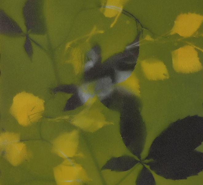 Leopold-Kogler_fleurs-fantomes_0146_Foto-(c)-kommunikationsagentur-sengstschmid
