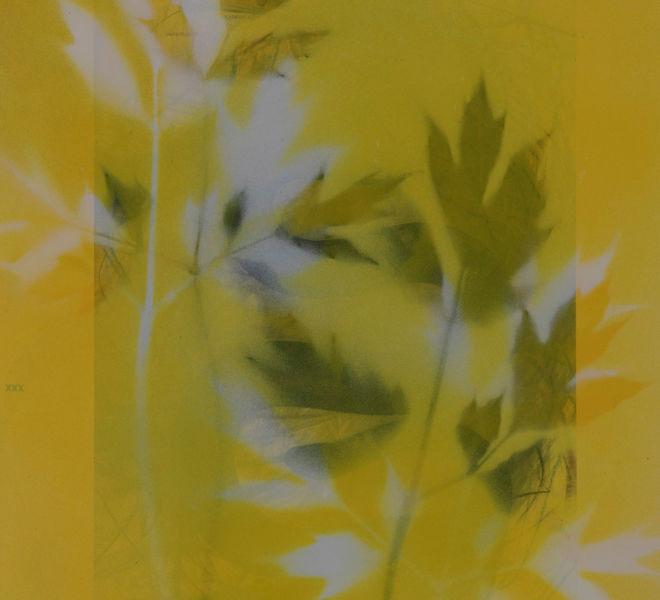 Leopold-Kogler_fleurs-fantomes_0148_Foto-(c)-kommunikationsagentur-sengstschmid