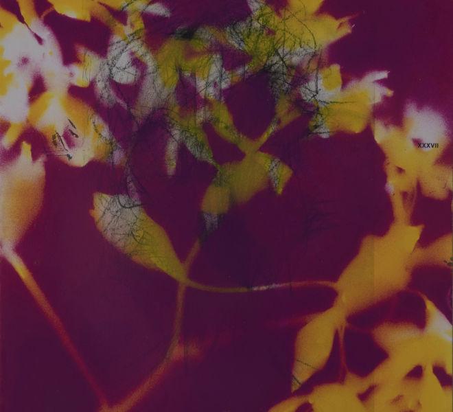 Leopold-Kogler_fleurs-fantomes_0151_Foto-(c)-kommunikationsagentur-sengstschmid