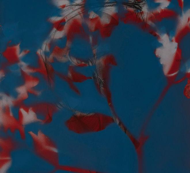 Leopold-Kogler_fleurs-fantomes_0155_Foto-(c)-kommunikationsagentur-sengstschmid