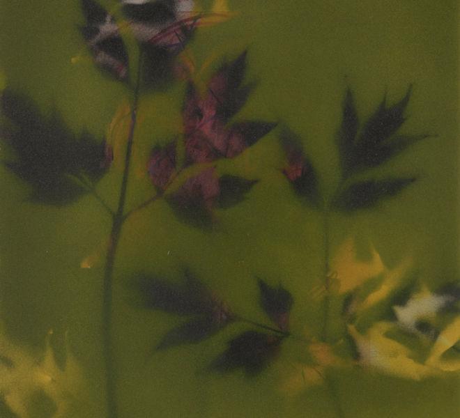 Leopold-Kogler_fleurs-fantomes_0162_Foto-(c)-kommunikationsagentur-sengstschmid
