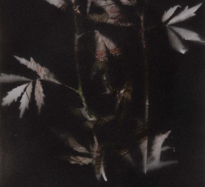 Leopold-Kogler_fleurs-fantomes_0179_Foto-(c)-kommunikationsagentur-sengstschmid