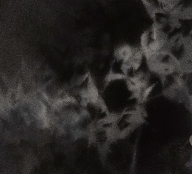 Leopold-Kogler_fleurs-fantomes_0209_Foto-(c)-kommunikationsagentur-sengstschmid