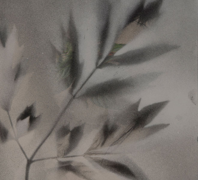 Leopold-Kogler_fleurs-fantomes_0212_Foto-(c)-kommunikationsagentur-sengstschmid