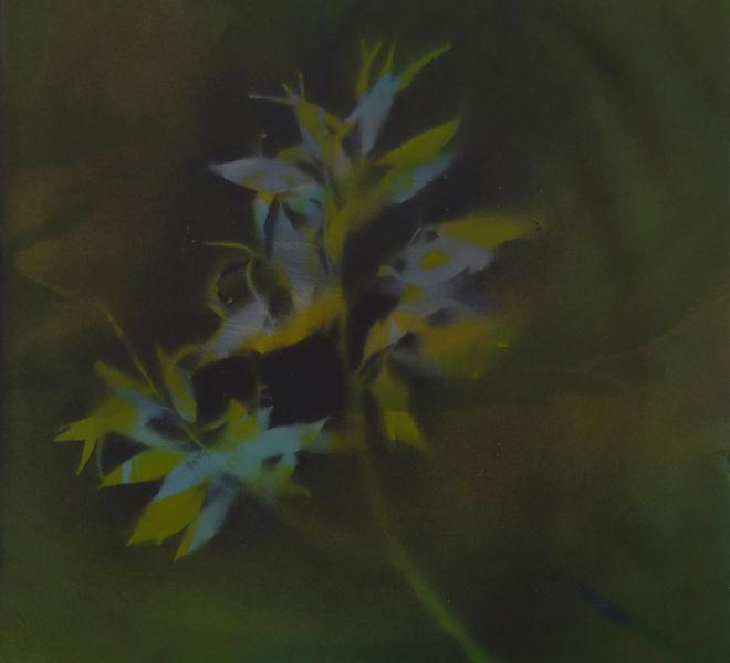 Leopold-Kogler_plante-admiree_0005_Foto-(c)-kommunikationsagentur-sengstschmid