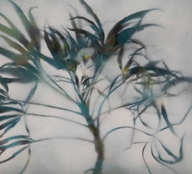 Leopold-Kogler_plante-blessee_0028_Foto-(c)-kommunikationsagentur-sengstschmid