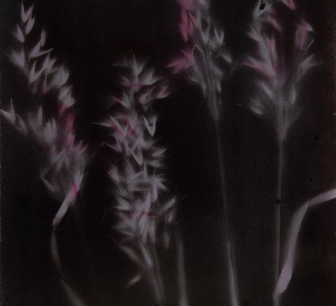 Leopold-Kogler_plante-blessee_0035_Foto-(c)-kommunikationsagentur-sengstschmid