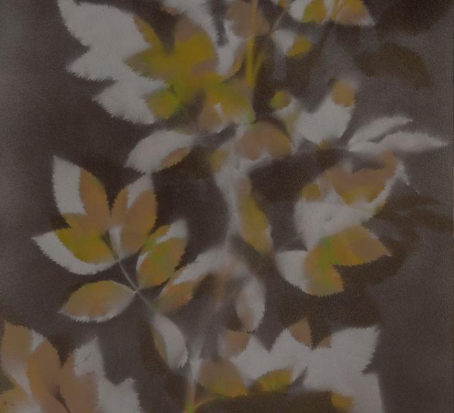 Leopold-Kogler_plante-blessee_0067_Foto-(c)-kommunikationsagentur-sengstschmid