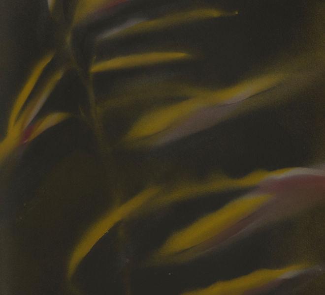 Leopold-Kogler_plante-blessee_0094_Foto-(c)-kommunikationsagentur-sengstschmid