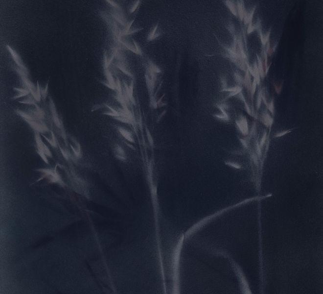 Leopold-Kogler_plante-blessee_0113_Foto-(c)-kommunikationsagentur-sengstschmid