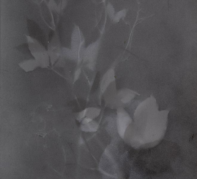 Leopold-Kogler_plante-blessee_0189_Foto-(c)-kommunikationsagentur-sengstschmid